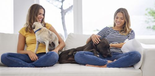 Women with dogs on couch